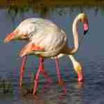 Doñana: el nacimiento de la ecología en España
