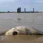 Agua tóxica en el Guadalquivir