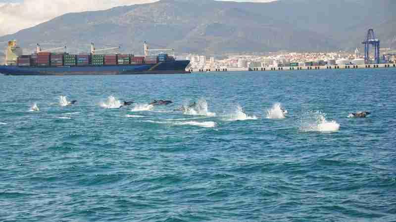 Los delfines, un tesoro natural del Estrecho de Gibraltar