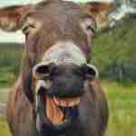 Amigo que votaste al PP: solo se ríen de ti