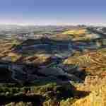 Las cinco crisis del olivar
