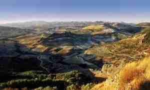 crisis del olivar jaen olivareros